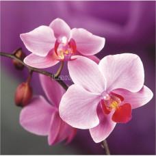 Картина круглыми камнями Орхидея на фиолетовом фоне 25*25