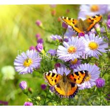 Картина для выкладывания камнями Ромашки с бабочками 20*20